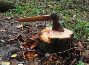 How to Remove Tree Stump without Using Grinder