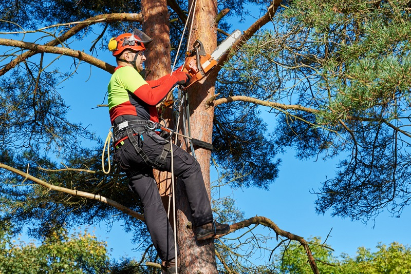 Melbourne-Tree-Removal